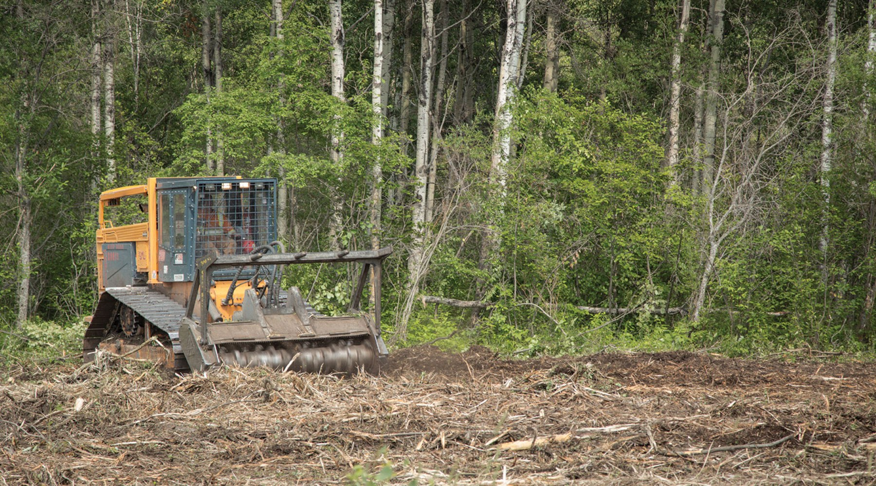 Forest clearing being carried out